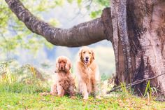 5 Professional Photographer Tips To Get Better Pet Photos and make sure your pets are looking at the camera via  Pretty Fluffy