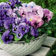 Stemor - vårens favoritt!