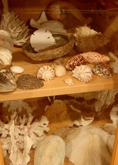 Coral and Shell Cabinet