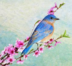 Male Bluebird Bird in Peach Tree Songbird Peach by FineArtography