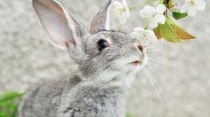 1419318, wallpaper desktop rabbit