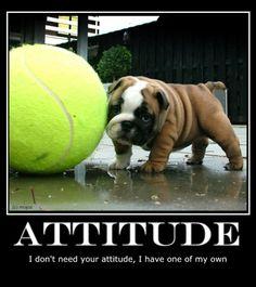 ❤ Attitude ❤ Posted on Mojos Bulldogs on Facebook