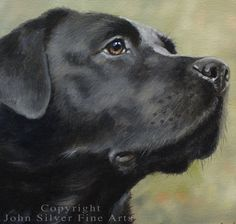 Custom Pet Portrait Head & Shoulders Dog Oil by JohnSilverFineArts
