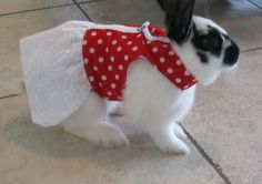 Pet rabbit harness dress . Made to order by turvytopsy on Etsy, $30.00
