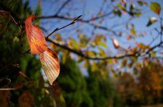 가벼운 사진한장... :: 낙엽 사진모음