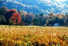 #cadescove - A beautiful sight to behold!