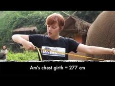 Did you know that you can estimate an elephant's weight by measuring its chest girth? Learn more here. --Think #Elephants International