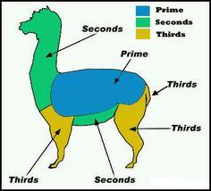 Alpaca Shearing Guide - HAPPY KNITTING!