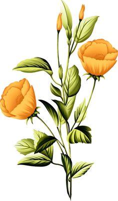 Beautiful Flowers Photos, Big Flowers, Flowers Nature, Flower Photos, Colorful Flowers, Vector Flowers, Botanical Flowers, Botanical Art, Peony Flower