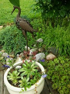 Suuri Pienoispuutarhan valokuvauskilpailu - Kurjen puutarha