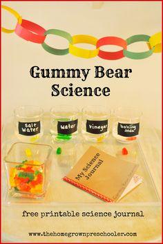 gummy bear blog