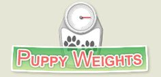 My English Springer Spaniel puppy should grow to 46lb 12oz :: Find out how big your puppy will grow - Puppy Weight Estimates
