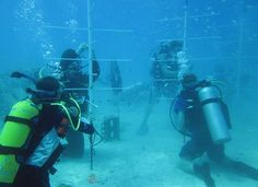 Combat Wounded & Injured Veterans, SCUBAnauts Team Up to Help Mote Marine Laboratory Restore Life to Florida's Reef