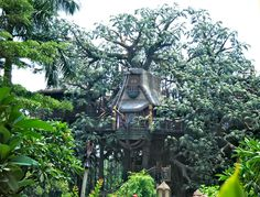 Tarzan's house in Adventureland