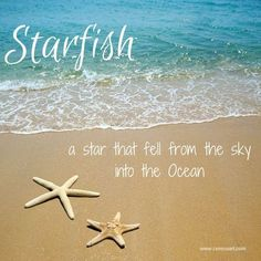 Beach Saying on CereusArt: Starfish - A Star that fell from the sky into the ocean. Sunset Beach, Ocean Beach, Beach Bum, Beach Relax, Ocean Quotes, Falling From The Sky, I Love The Beach, Beach Signs, Waves