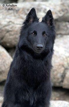 Zeda, dire wolf