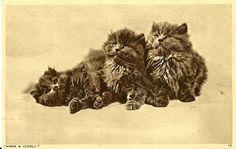 Art Three Cat Circulated 1957 Postcard | eBay