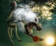 Underwater Dog Photography 9