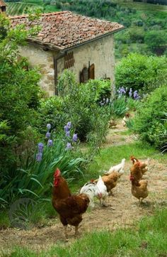 Keep Chickens Off Porch . Keep Chickens Off Porch . Country Farm, Country Life, Country Living, Beautiful Birds, Beautiful Places, Chickens And Roosters, Country Scenes, Chickens Backyard, Backyard Ideas