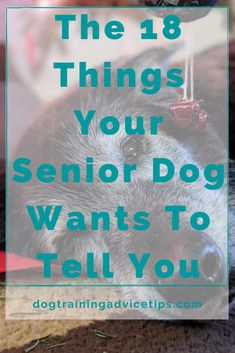 The 18 Things Your Senior Dog Wants To Tell You. #dogtrainingadvicetips #dogcare #doghealth #dogtips #dogs Basic Dog Training, Dog Training Videos, Mr Macs, Feeling Unwanted, See You Around, Pregnancy Guide, Dog Ages, Dog Owners, To Tell