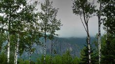 da_#charlevoix#tourismequebec#moncharlevoix#charlevoixatr#explorequebec#fiftyshades_of_nature_#fotofanatics_nature_ #ig_naturelovers#nature#quebecenphotos#amateurs_shot#ig_naturelovers#ww_nature_trees#hugs_for_trees by elromcan