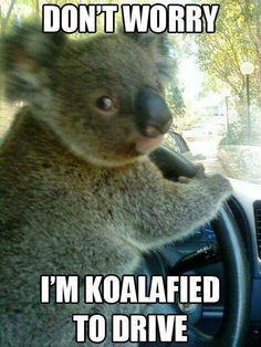 Koala bear :-)