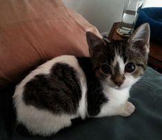 Adorable kitten with a \heart\ spot!