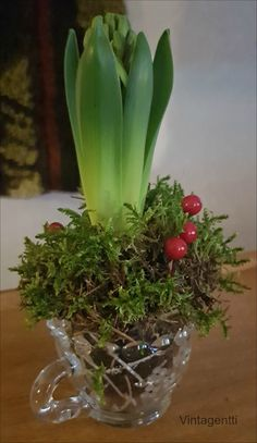 Vintagentti: DIY; hyasinttikokedama Plants, Diy, Bricolage, Do It Yourself, Plant, Homemade, Diys, Planets, Crafting