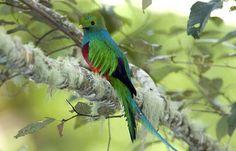 Costa Rica vai fechar todos os zoológicos e libertar os animais