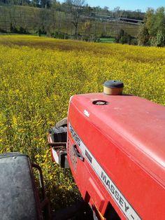 La ferme de Vanessa: Semis dans le couvert estival Farm Gate