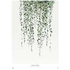 Mink Interiors Urban Botanics String Of Pearls Limited Edition Art... ($87) ❤ liked on Polyvore featuring home, home decor, wall art, photo wall art, photo painting, urban wall art, floral paintings and floral wall art