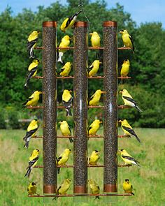 Feed a bevy of birds in this super-sized feeder. There's room for 24 birds — imagine the sight of this feeder filled with goldfinches!