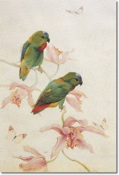 Edward Julius Detmold (1883 Putney, Wandsworth, Surrey, 1957 Montgomery), Parakeets on an Orchid Painting