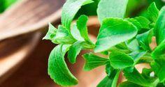Aprende a cultivar Stevia: siembra, cuidados y usos - http://jardineriaplantasyflores.com/aprende-a-cultivar-stevia-siembra-cuidados-y-usos/