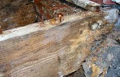 Wood rot can be caused by water damage to your home's foundation. For ways to stop this and also other DIY drainage solutions visit www.ndspro.com/diy-drainage