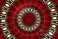 """Roses Kaleidoscope Under Glass 18:  This beautiful kaleidoscope was digitally created from a photograph I took of a lovely bouquet of roses. I also added an """"under glass"""" special effect digitally to the center of the picture. The """"Fine Art America"""" watermark (in the lower right corner) will NOT be on your purchased product.  Prices start at $4.30"""