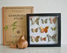 Fjärilar med kartmotiv av Fanny på Flora Interiör