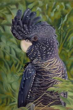 """""""Nelly"""" Red -tailed Black Cockatoo Nelly painted in oils on canvas. 2017 finalist in the MidWest Art Prize and the prestigious Clifton's Art Awards. Original painting and Prints Available. Buy now! Pretty Birds, Beautiful Birds, Animals Beautiful, Australian Parrots, Australian Artists, Aquariums, Paintings For Sale, Bird Paintings, Bird Pictures"""
