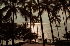 silhouette, tree, palm tree, sea, growth, tranquil scene, scenics, water…