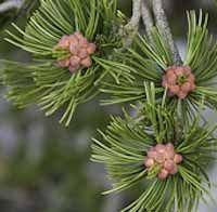 WA Native Plant Society