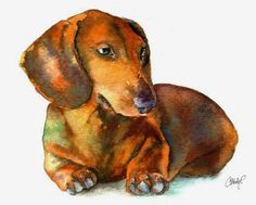 Christy Freeman | WATERCOLOR | Dachshund Puppy