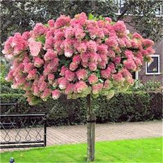 120 Pcs Hydrangea Flower Seeds Multi Color