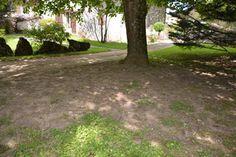 Sol à nu sous les arbres : la pelouse ne pousse pas