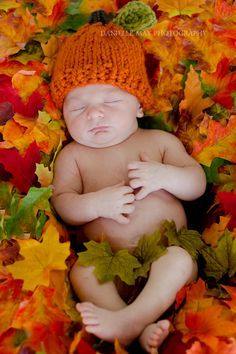 thanksgiving newborn boy photos - Google Search