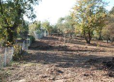 Land for sale, Greece, Corfu, Kalafationes near Corfu Town.