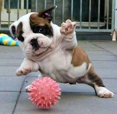 #funny #cute #puppy