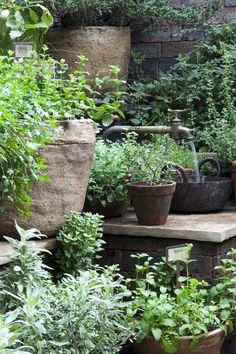 42 Top Diy Container Herb Garden Design Ideas - Page 30 of 42 Container Herb Garden, Garden Pots, Potted Garden, Potted Herbs, Herb Pots, Garden Table, Container Plants, Garden Sink, Brick Garden