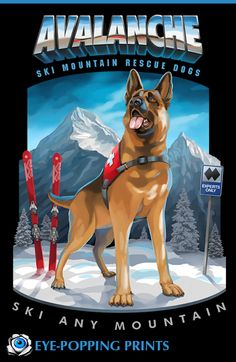 AVALANCHE SKI MOUNTAIN RESCUE DOGS A rescue dog stands ready for action at the top of an expert downhill route. This German Shepherd is proudly wearing it's uniform, surveying a massive, wild mountain range and eagerly anticipating helping to rescue a stranded ski sports enthusiast.