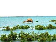 Zaylac, Awdal Region   Somaliland