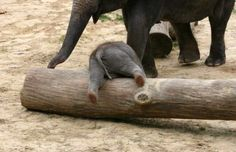 Whoops, just a log.                                              Now someone please help me up